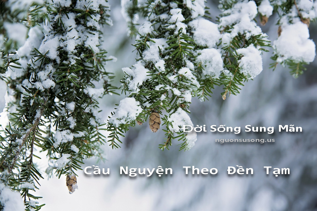 doi song sung man - cau nguyen theo den tam